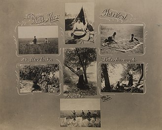 Rice Lake (Ontario) - The Wild Rice Harvest, photographs of Rice Lake from 1908