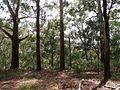The Woddi Woddi Track - panoramio (1).jpg