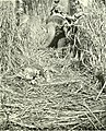 The diary of a sportsman naturalist in India (1920) (20709100989).jpg