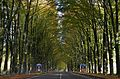 The famous Middachterallee with at both sides double rows of beeches. Already one century ago wllknown, but in the seventies planted with new trees, so it takes another fifty years to close the sky over the road at Rhed - panoramio.jpg
