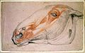 The muscles of the head of a horse. Chalk drawing by Charles Wellcome L0022253.jpg