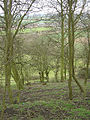 The scarp of Gotham hill - geograph.org.uk - 739133.jpg
