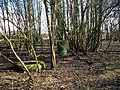 Things in the Wood - geograph.org.uk - 1715963.jpg