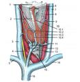 Thyroid2-dumb-wih-key.png