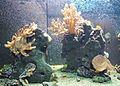 Tierpark Hellabrunn - aquarium 2.jpg