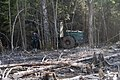 Timber Truck, Khimki Forest 3.jpg