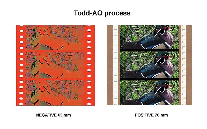 File:ToddAoNegativePositive.jpg