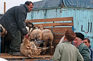 Turkmens - Tolkuchka Bazaar in Turkmenistan