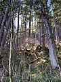 Tongass National Forest with Sunlight 16 57 42 902000.jpeg