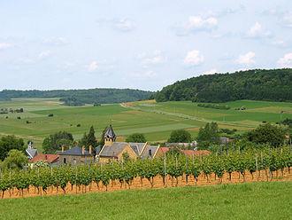 Torgny (village) - Torgny with vineyard