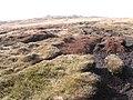 Towards Bleaklow Stones - geograph.org.uk - 1199344.jpg