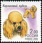 Toy-Poodle-Canis-lupus-familiaris.jpg