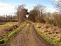 Track through Humberhead Peatlands NNR - geograph.org.uk - 1172797.jpg