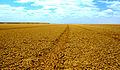 Tracks Chalbi Desert.jpg