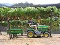 Tracteur vigneron John Deere dans une vigne en hautain.jpg