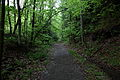 Trail-hawksnest-west-virginia - West Virginia - ForestWander.jpg