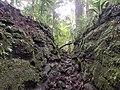 Tramo del Camino Real de Cruces - Panamá.jpg