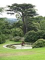 Tree at YSP - geograph.org.uk - 1454945.jpg
