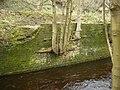 Tree growing out of wall below Lee Mill Bridge - geograph.org.uk - 1166074.jpg