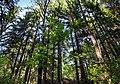 Trees growing on the slope into Gullmarsskogen ravine.jpg