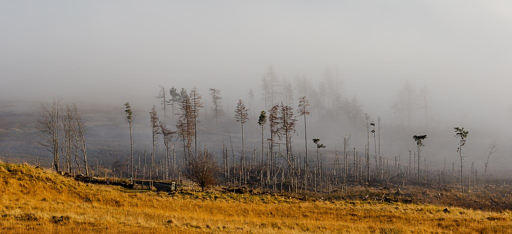 Trees in fog on the northern side of Loch Tay, Scottish Highlands, Scotland.jpg