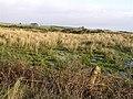 Tullyquin Glebe Townland - geograph.org.uk - 303658.jpg