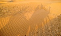 Sahara desert in Tunisia and shadows of camels...