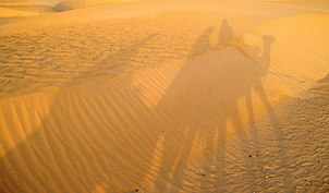 Sahara desert in Tunisia and shadows of camels with travelers