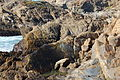 USA-Point Lobos State Reserve-South Shore Trail-13.jpg