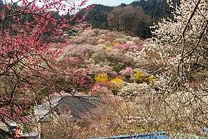 Ōme, Tokyo - Ōme Ume Gardens