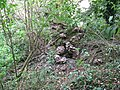 Unknown Fungi on fallen tree beside permissive path - geograph.org.uk - 1523741.jpg