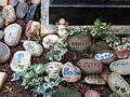 V. An dem Ort des Gedenkens auf dem Bergfriedhof Heidelberg erinnern die Namen und ein letzter Gruß auf Steine gemalt von Freunden und Angehörigen an die Dahingegangenen.JPG