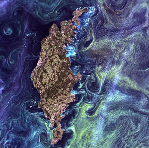 Algal bloom - Satellite image of phytoplankton swirling around the Swedish island of Gotland in the Baltic Sea, in 2005