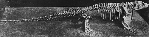 Varanosaurus