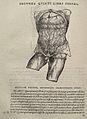 Vesalius Fabrica p356.jpg