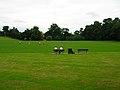 Victoria Park - geograph.org.uk - 541925.jpg