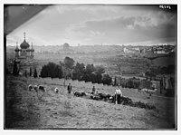 View of Jerusalem & Gethsemane. Sheep & shepherd in foreground. LOC matpc.04249.jpg