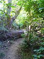 View of walking trail in the forested part of Molalla River State Park, Oregon.jpg
