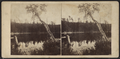 View on the South Lake, Catskill Mountain, by E. & H.T. Anthony (Firm) 2.png