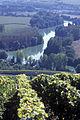Vigne Pinot noir (Vue sur la Marne) Cl.J.Weber10 JPG. (23651602086).jpg