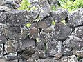 Vignes Pico3 (20065189050).jpg