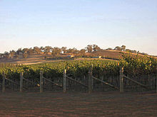 Photo de vignoble de la Riverina.