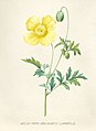 Vintage Flower illustration by Pierre-Joseph Redouté, digitally enhanced by rawpixel 93.jpg