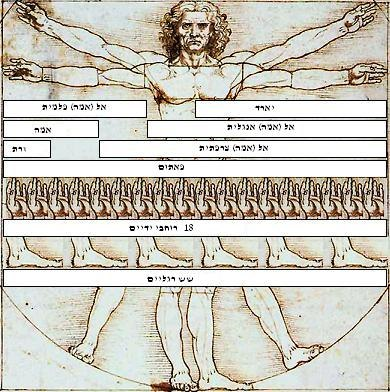 Vitruvian Man Measurements he