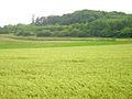 WARTBERG-SUEDSEITE-rosdorf 001.jpg