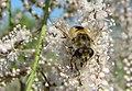 WILCZE ŁUGI wiosna kwiaty i .... 03 - panoramio.jpg