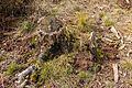Wandeling over het Hulshorsterzand 49.jpg