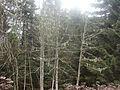 Wanderung im November - panoramio (24).jpg