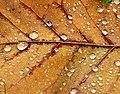 Waterdrops - Flickr - Stiller Beobachter (1).jpg