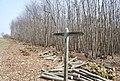 Waymarker on the edge of Kemp's Wood - geograph.org.uk - 1252063.jpg